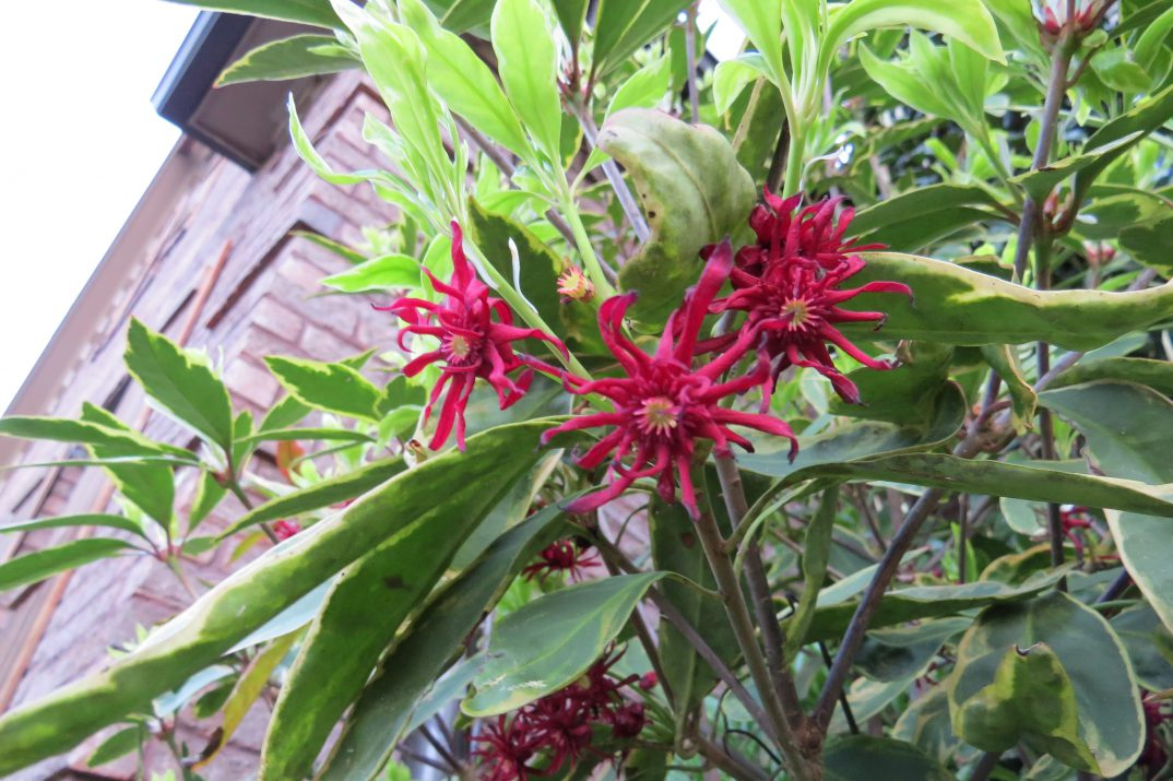 IlliciumFirstEditionsPinkFrost-09-10206-1